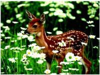 thought-bambi