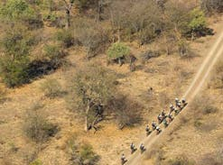 The Tour de Kruger takes bikers on a 70-kilometre ride every day for five days, through pristine African bushveld.