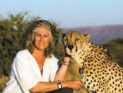 The majestic cat's numbers are dwindling, but Laurie Marker's pioneering work is pushing it towards future survuval. (Image: Tyler Prize)