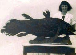 fish2-text