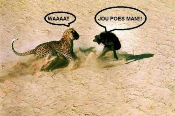 South African Humour at its Best. Great SA Pictures.