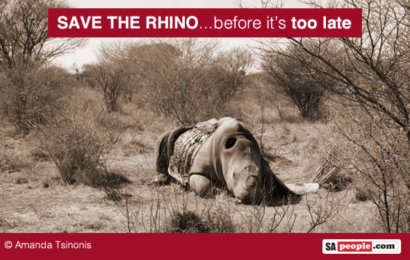 Save the rhino in South Africa