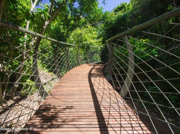 Planks have already been laid here - at the new Treetop Canopy Walkway at Kirstenbosch National Botanical Garden.