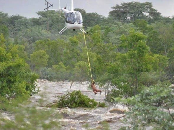 Helicopter rescue at Vaalwater