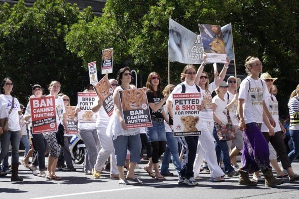 Global March for Lions in Cape Town