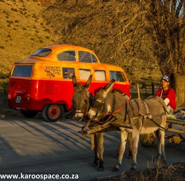Creek meets Karoo in the form of a Nieu-Bethesda donkey taxi.