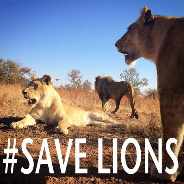 Save Lions