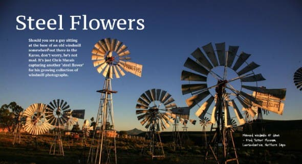 Steel Flowers - windmills