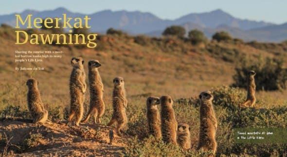 Meerkat Dawning