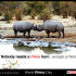 rhino-day