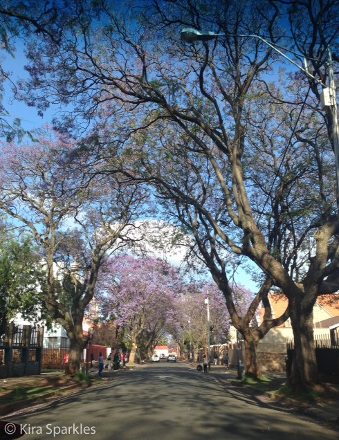 Drive through Yeoville this morning, avoiding traffic on the main roads.... Beautiful❤️❤️ From: Kira Sparkles