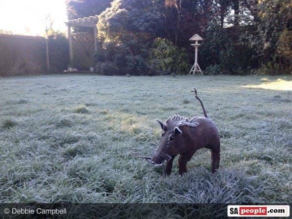 Icy Warthog