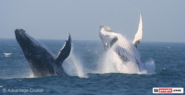 Whales, St Lucia, South Africa