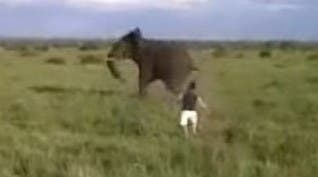 sapeople - drunk man charges elephant