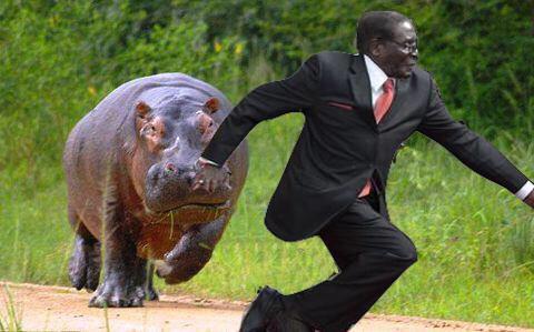 mugabe-hippo