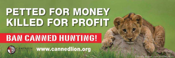 Ban Canned Hunting Lions South Africa