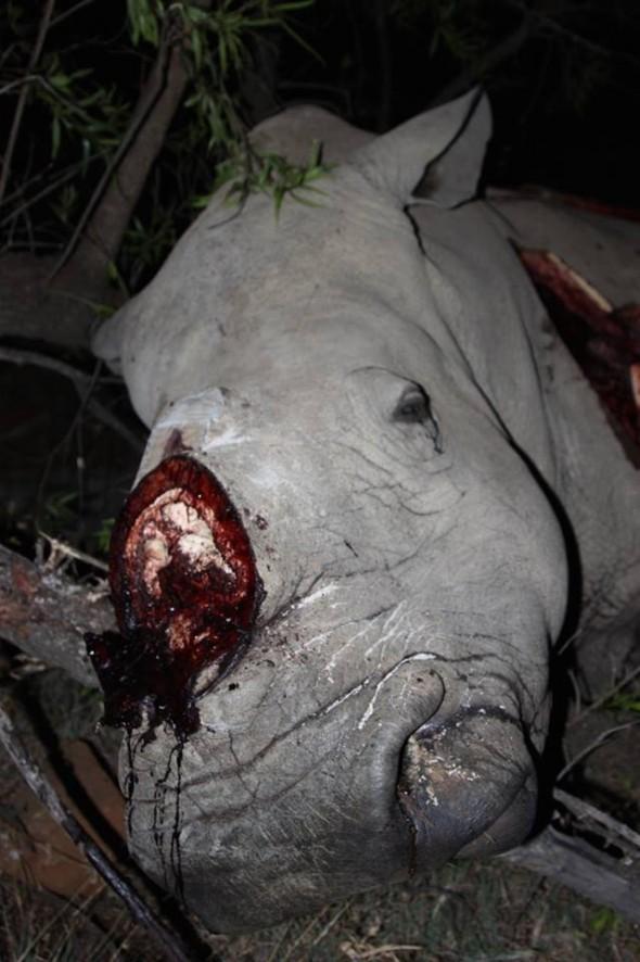 Rhino Reward South Africa