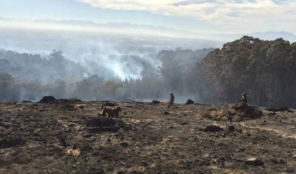 Members of the Tokai Troop survey their smoldering landscape. Pic: Dr Phil Richardson