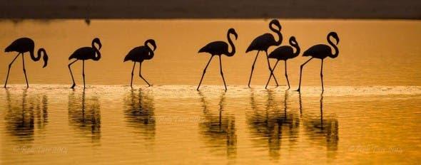 Flamingos at sunset on Lagoon Beach, Noordhoek, South Africa