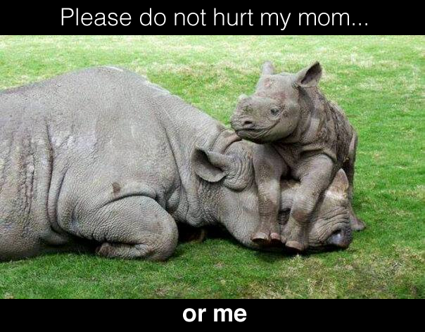 Rhino Please do not hurt my mom or me