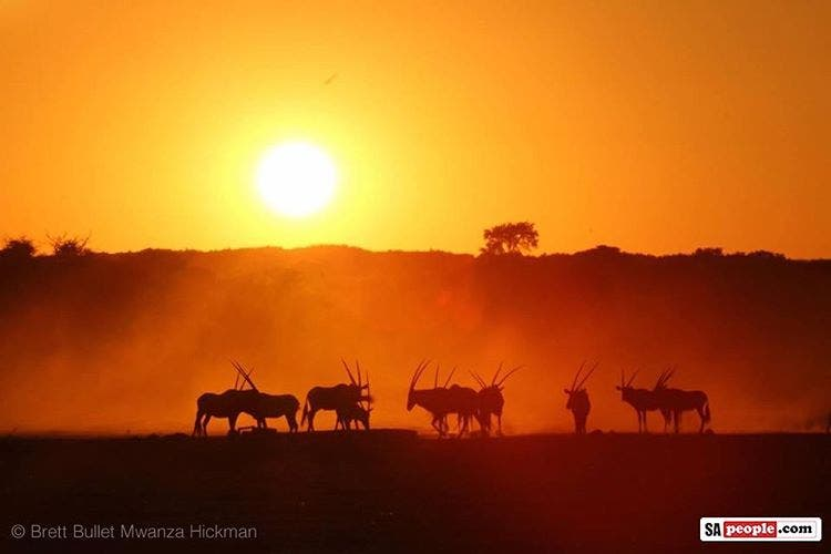 Sunset in the Kgalagadi Wow! Thank you Brett Bullet Mwanzahellip