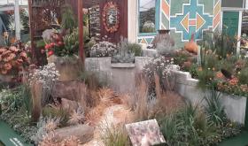 Part of SANBI Kirstenbosch RHS Chelsea Flower Show 2015 exhibit. © Kay Montgomery
