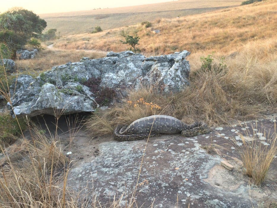 Python and Porcupine South Africa