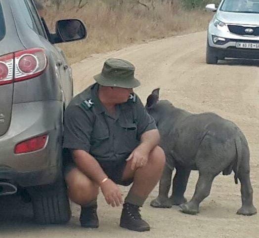 Baby rhino South Africa