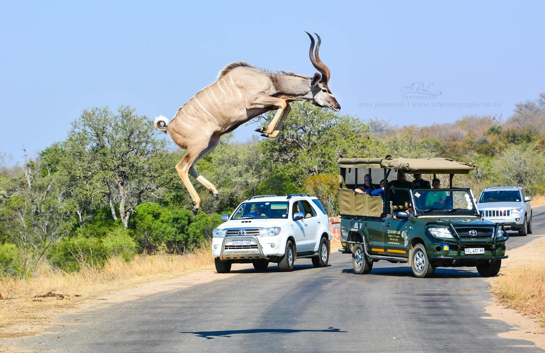 Incredible Photos Of Kudu Jumping In South Africa