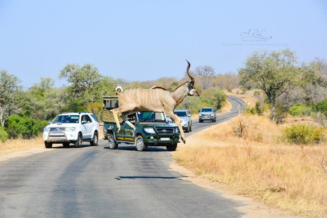 Kudu Jump in South Africa