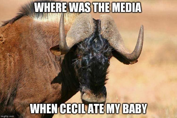 Cecil, Zimbabwe lion picture