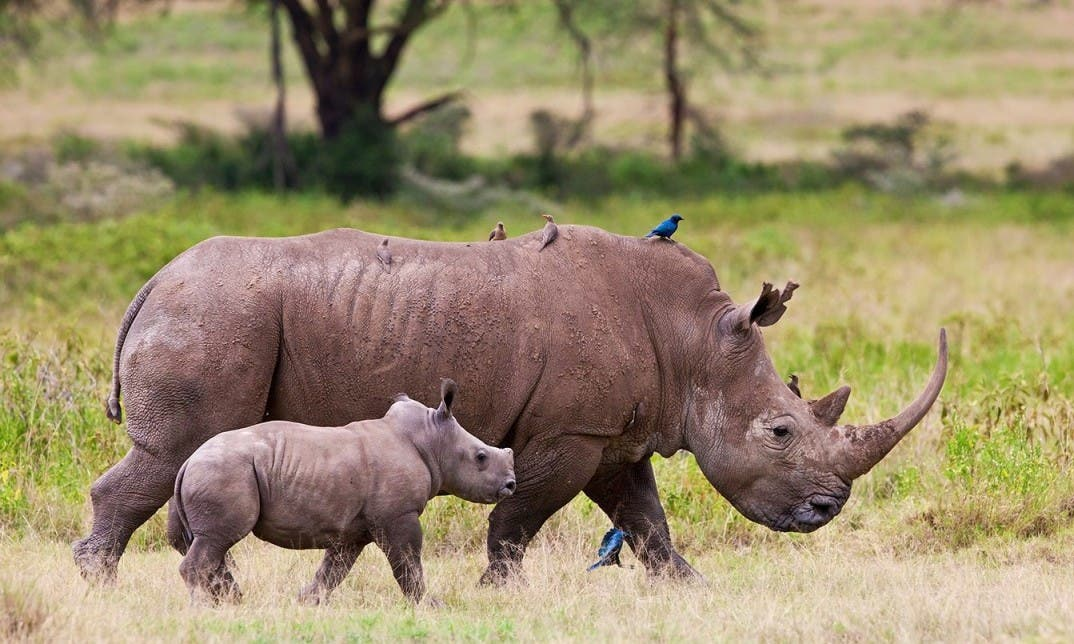 The SanWild Rhino Sanctuary
