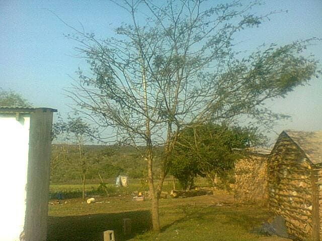 Nkosinathi's tree, planted in 2010