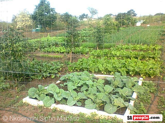 how to plan a vegetable garden in south africa