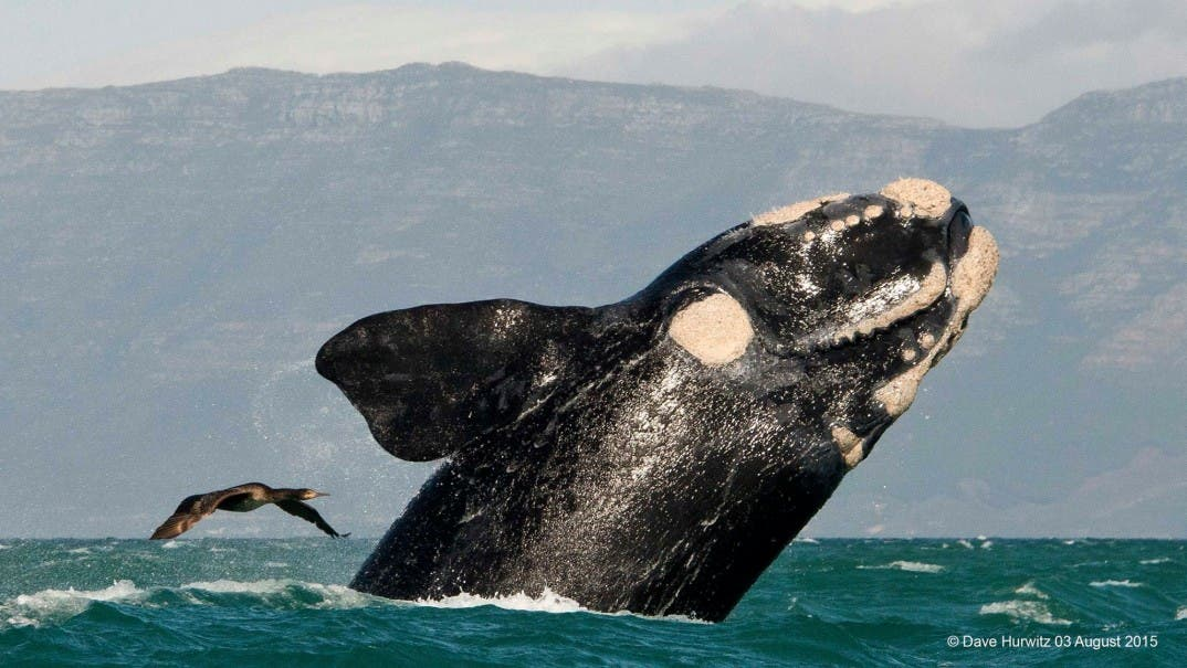 Whale South Africa