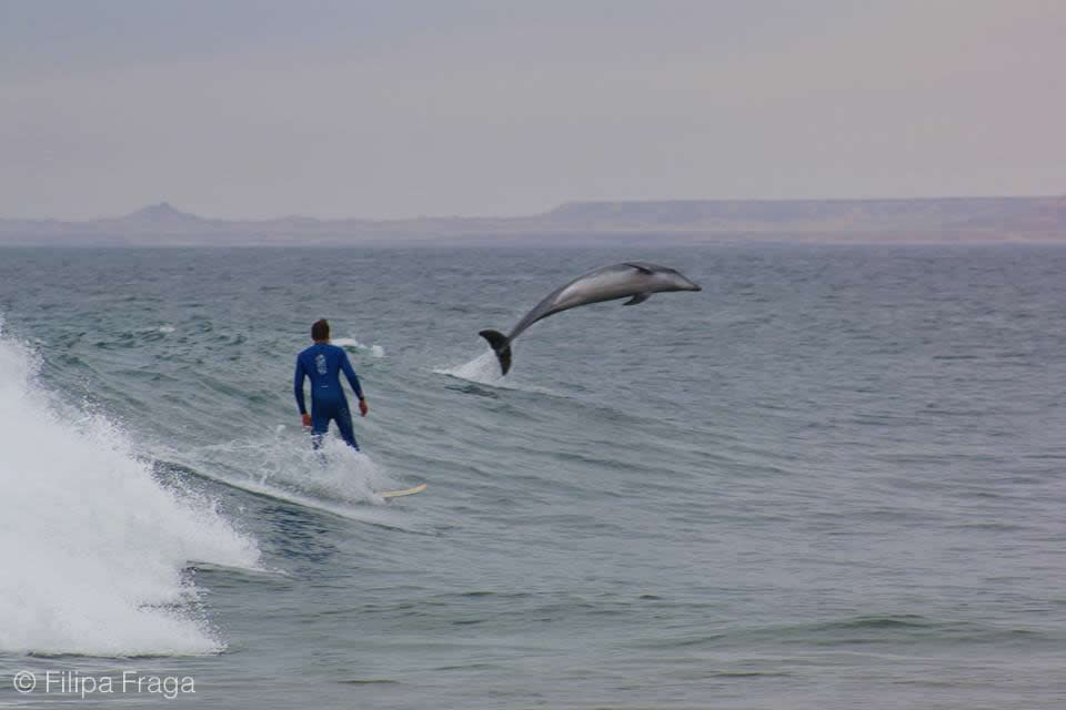 Dolphins in Angola