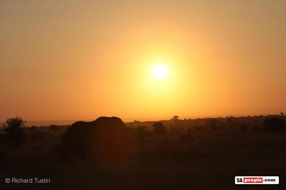 kruger-elephant