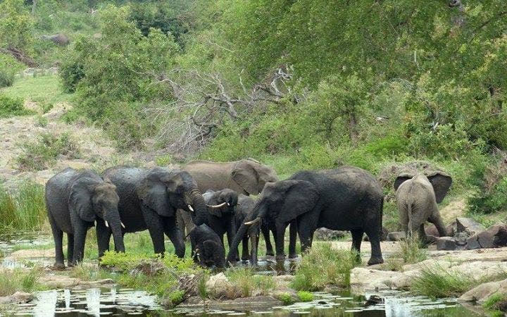 Elephant Poaching South Africa