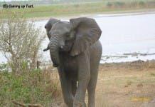 Elephant Story South Africa