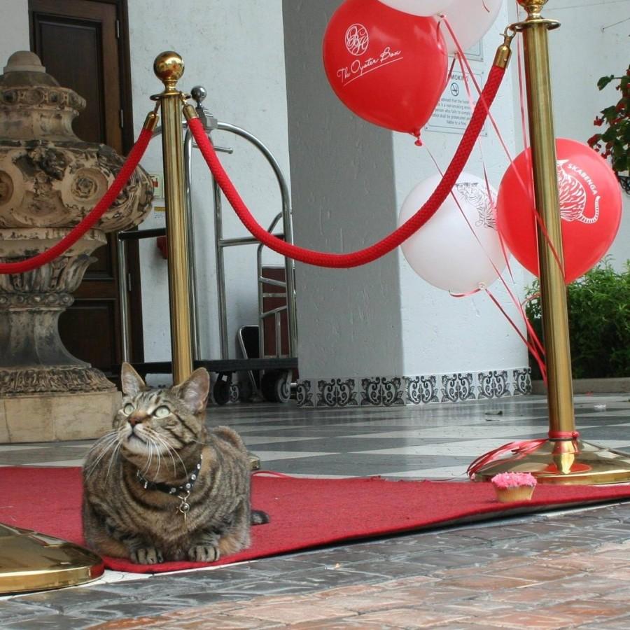 Skabenga on the red carpet