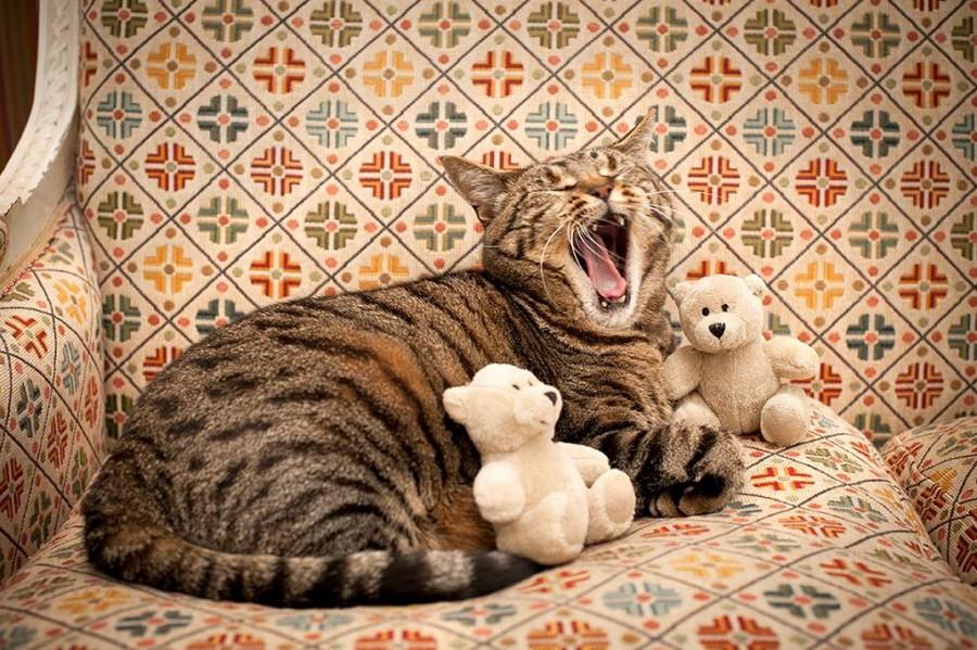 Skabenga yawning