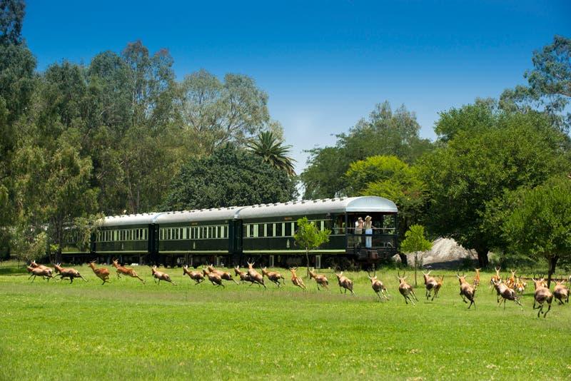 rovos-train