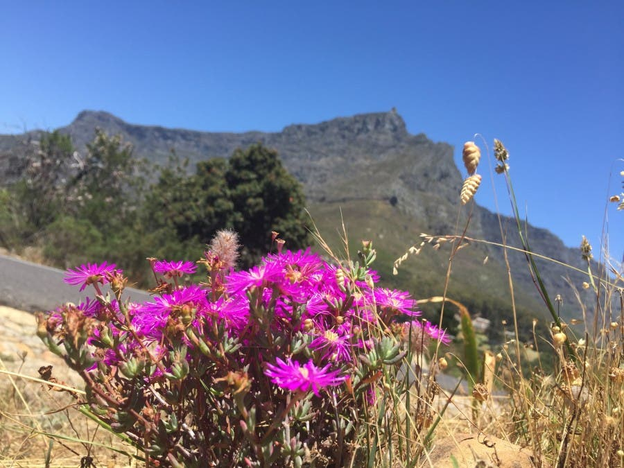 tablemountain
