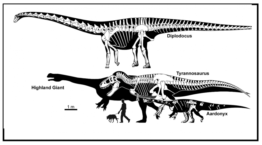 A diagram showing the difference in size between the Highland Giant and other dinosaurs. Source: