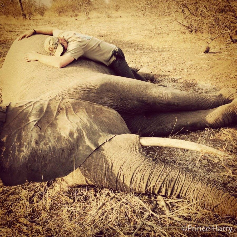 Prince Harry with elephant
