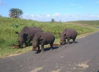 Rhinos slaughtered in KZN