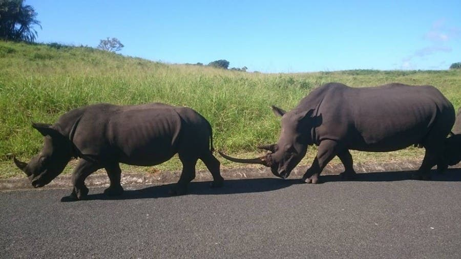 Rhinos slaughtered in KZN