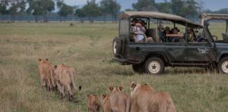 lions-kenya