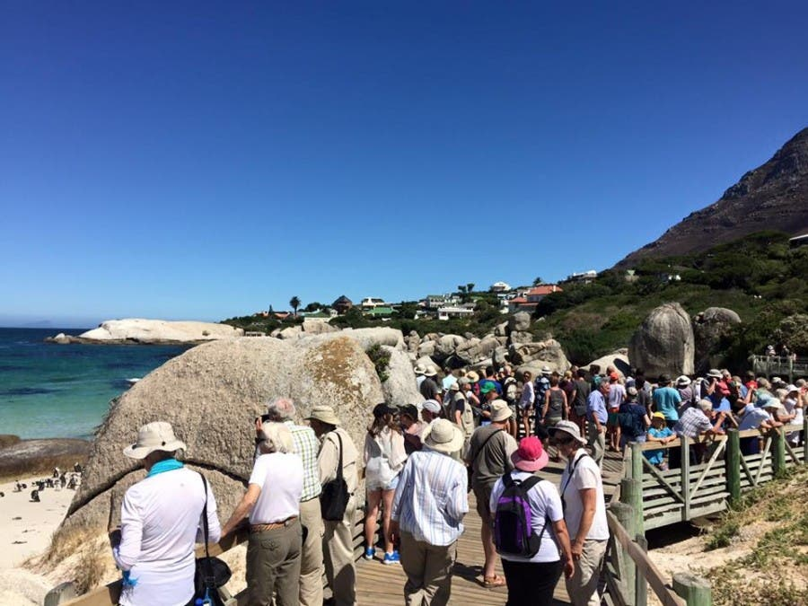 Penguins and crowds