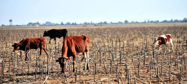 Drought South Africa